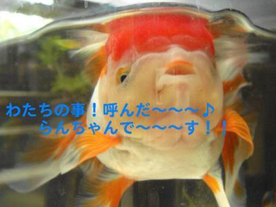 Dsc04068_2